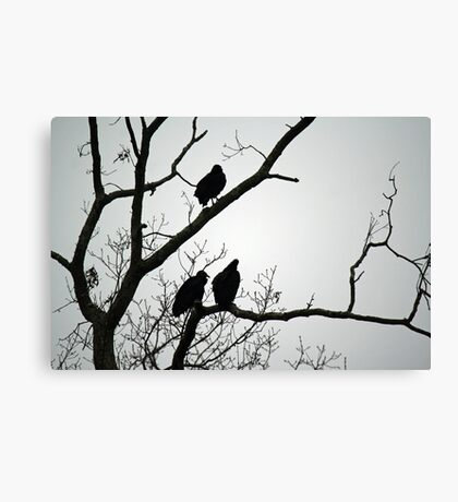Three weird sisters.... Canvas Print