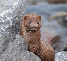 My Mink by Lynda   McDonald