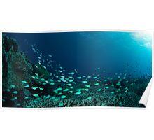 Reef scene panorama Poster