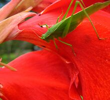 Little Green Grass Hopper by hallucingenic