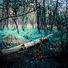 Strange woods by Simon Duckworth