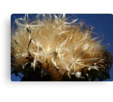 Thistle to Seed Canvas Print