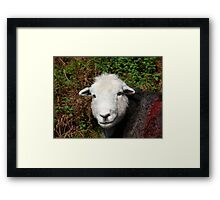 Herdwick Sheep Framed Print