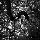 Scary Tree- Botanic Gardens Oak by Ben Loveday