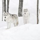 Arctic Forest's Snow Wolves by Poete100