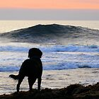 Contemplating a Surf :) by Honor Kyne