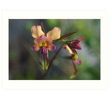 Orchids of Western Australia Art Print