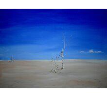Barren Landscape Photographic Print