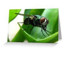 Shoo Fly Don't Bother Me Greeting Card