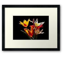Tulip flowers against black background Framed Print