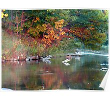Fall color reflection  Poster