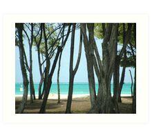Bellows Beach Art Print