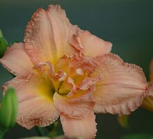 Just Peachy by Expressions &  Reflections