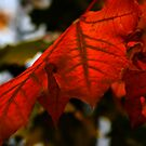 Start of fall by Veronica Maur'er