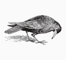 Rook Black Bird Soul Escort by Zehda