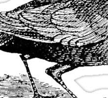 Rook Black Bird Soul Escort Sticker