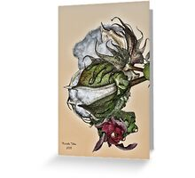 Cotton Plant Greeting Card