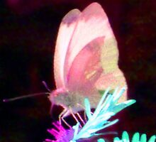 Glow-in-the-dark Butterfly  by Expressions &  Reflections