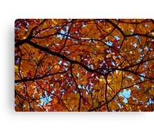 Mother Nature's Stained Glass Canvas Print