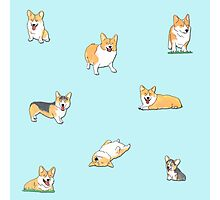 Corgi's Photographic Print