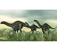 Apatosaurus Photographic Print
