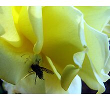 Smell My Rose Will You! Photographic Print
