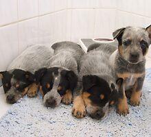 Dogs In Blue by Jen7
