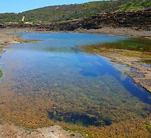Catho Rockpool 1 by Brad Woodman