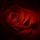 Sparkling Red Rose by Lori Deiter