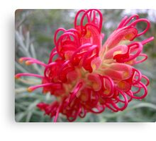 Red Curls Canvas Print