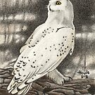 Ever Watchful - Snowy Owl by John Houle