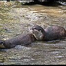 Otters at Play by mrcoradour