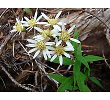 Flowers of Algonquin Photographic Print