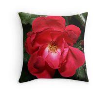 Knock-Out-Rose Throw Pillow