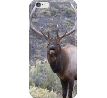 Bull Elk Bugling iPhone Case/Skin