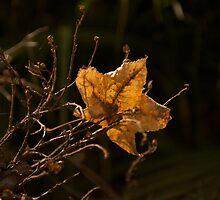 fallen star by petalpress