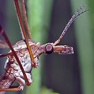 Fly Crane by Karen Checca