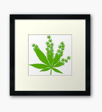 Cannabis from cannabis leaves  Framed Print