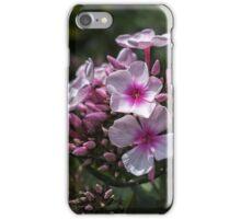 Phlox paniculata iPhone Case/Skin