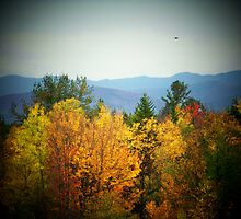 Fall in the Mountains by imagesbydale