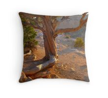 Grand canyon, Hopi Point, cypress tree Throw Pillow