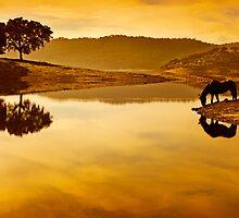 Lago y Caballo by juanc