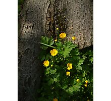 'Buttercups' Photographic Print