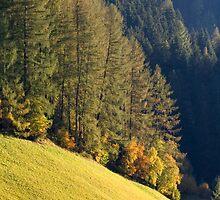 Autumn Sun by Walter Quirtmair