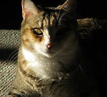 Precious Sunshine by Jeralynn