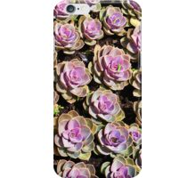 Hens and chicks and hens and  iPhone Case/Skin