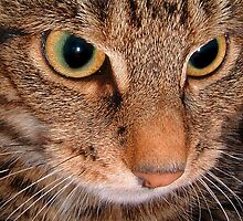 Eye Spy..... by Sally Green