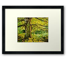 Summer Woodland Framed Print