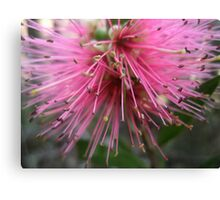 Bounty Of Pink Canvas Print