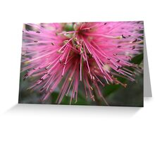 Bounty Of Pink Greeting Card